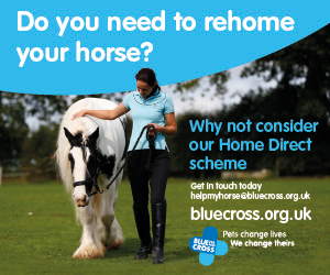 Blue Cross 2020 A (Merseyside Horse)