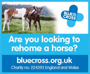 Blue Cross 2020 B (Merseyside Horse)